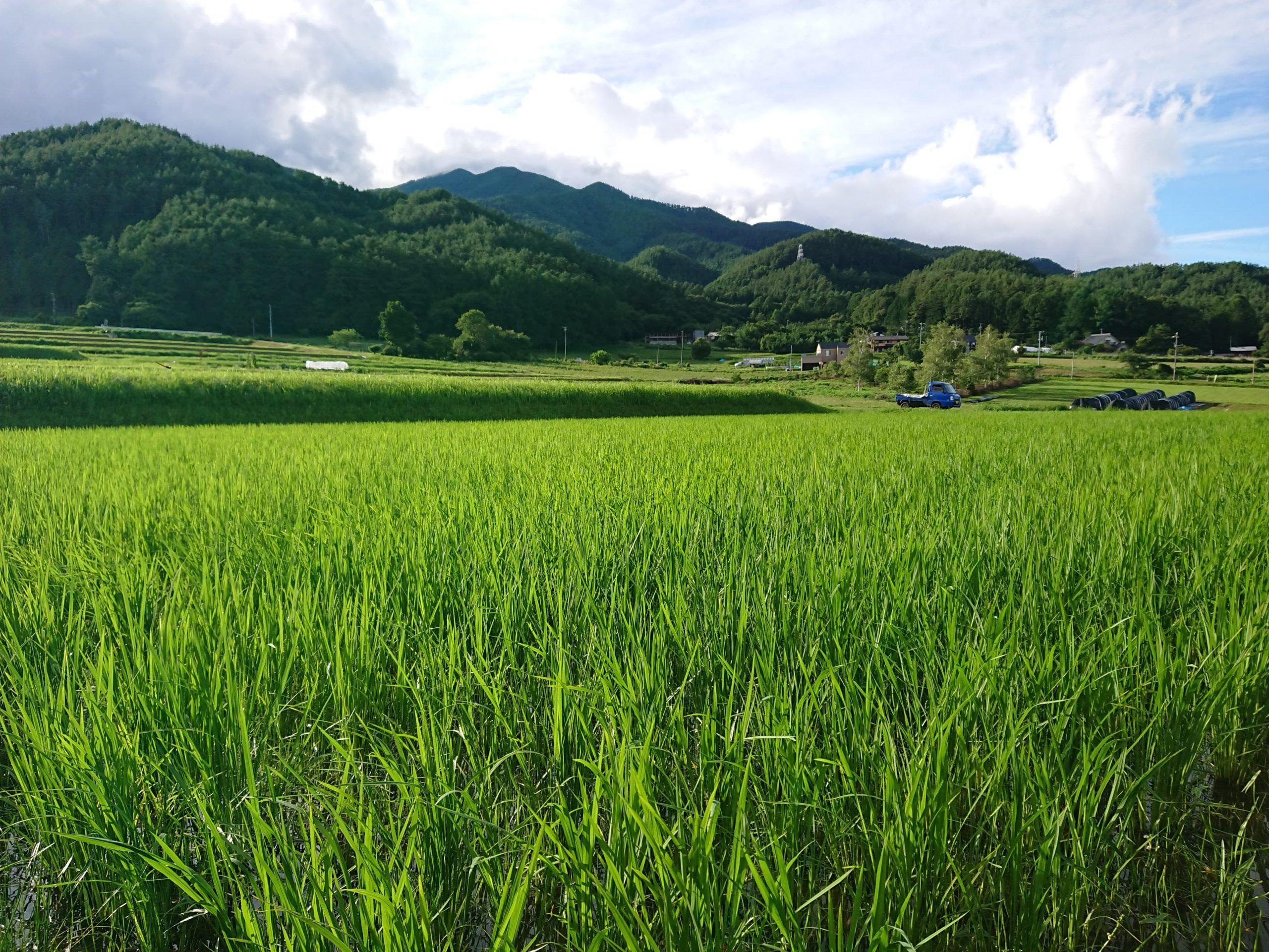 野菜:momoGファーム (長野県南箕輪村)